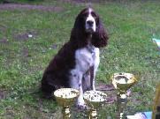 Bohemia Cup RHFL